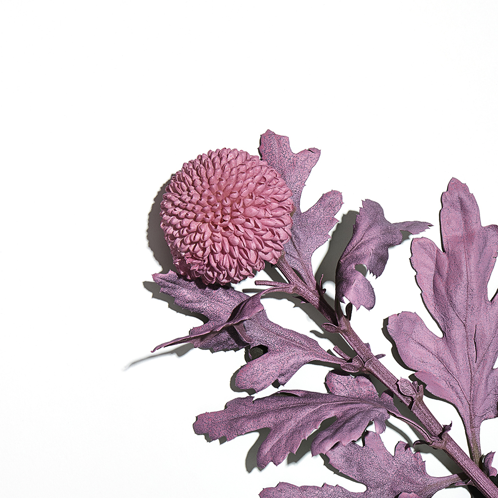 A still life image of a flower spray painted on a white background